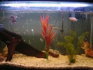 Vendo aquário de 300litros semi novo