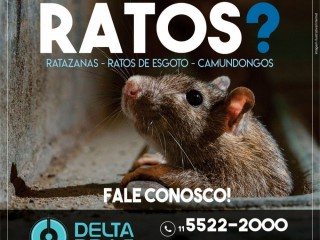 Dedetização de ratos em Diadema